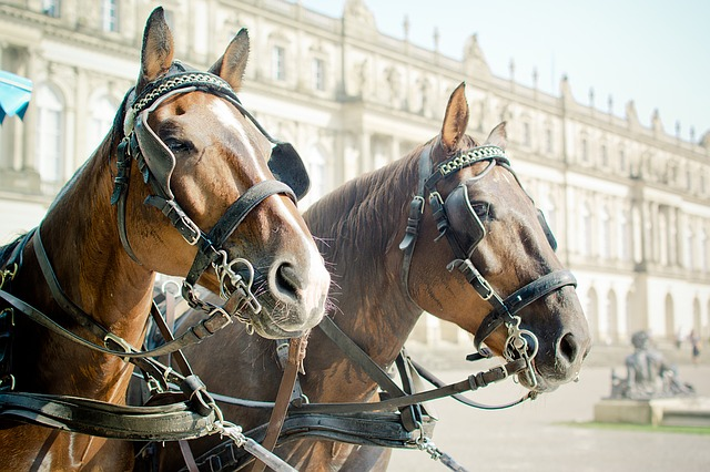 Horse Drawn Carriage 1157187 640